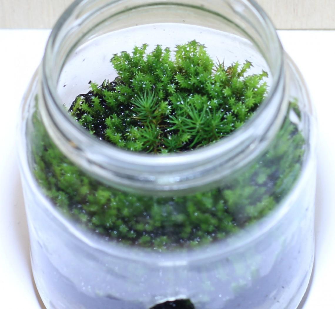 moskweek in glazen pot
